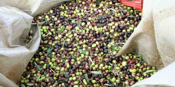 ελαιόλαδο αρωματικό καλύτερο παγκοσμίως olive oil best first worldwide gourmet