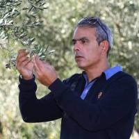 Sparta olive estate breaks world record with tally of 203 awards
