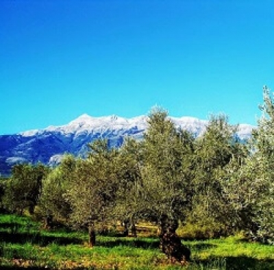 George Sakellaropoulos, the pioneer of awards: The olive oils of Sakellaropoulos Organic Farms are ranked among the best in the world for 2019